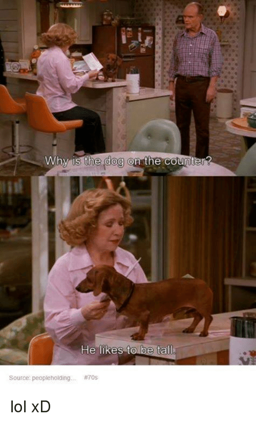 Dogs, Lol, and Memes: Why is the dog on the counter?  He likes to  be ta  Source: peopleholding  lol xD