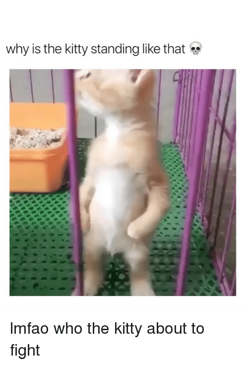 Girl Memes, Lmfao, and Fight: why is the kitty standing like that lmfao who the kitty about to fight