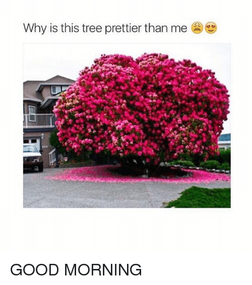 Good Morning, Good, and Tree: Why is this tree prettier than me GOOD MORNING