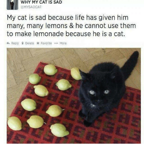 Life, Memes, and Sad: WHY MY CAT IS SAD  GMYSADCAT  My cat is sad because life has given him  many, many lemons & he cannot use them  to make lemonade because he is a cat.  RepyDelete FavoriteMore