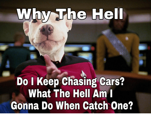 Cars, Hell, and One: Why The Hel  Do I Keep Chasing Cars?  What The Hell Am I  Gonna Do When Catch One?