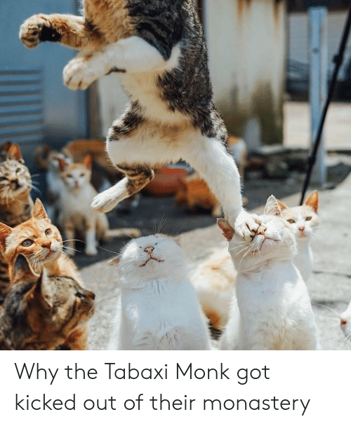 Why the Tabaxi Monk Got Kicked Out of Their Monastery | DnD