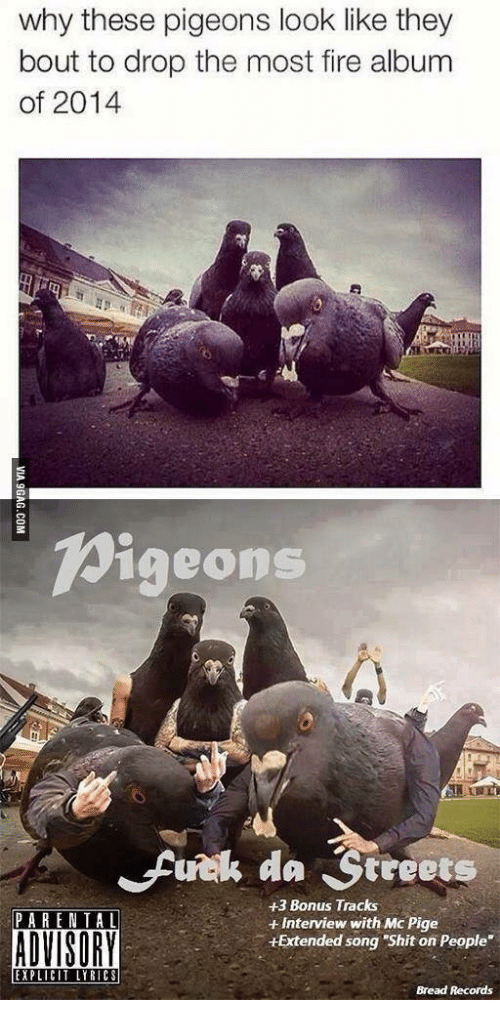 25 best memes about pigeon album pigeon album memes bread bic and pigeon why these pigeons look like they bout to drop malvernweather Gallery