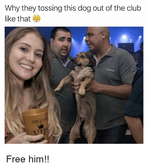 Club, Funny, and Free: Why they tossing this dog out of the club  like that  VILLA Free him!!