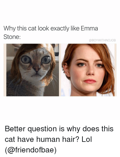 Funny, Lol, and Emma Stone: Why this cat look exactly like Emma  Stone  a BOYWITHNOJOB Better question is why does this cat have human hair? Lol (@friendofbae)