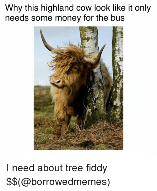 Memes, Tree, and 🤖: Why this highland cow look like it only  needs some money for the bus I need about tree fiddy $$(@borrowedmemes)
