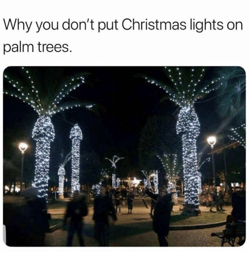 why-you-dont-put-christmas-lights-on-palm-trees-29584904.png