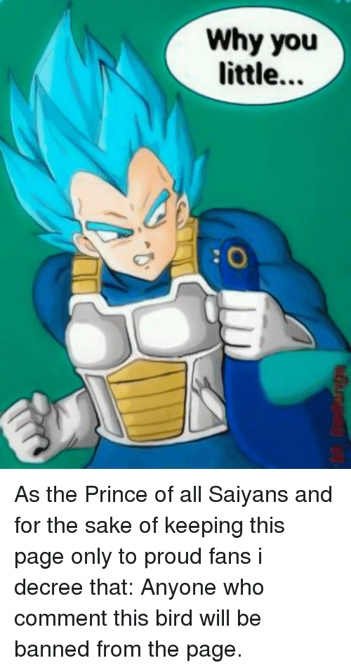 Memes, Prince, and Birds: Why you  little As the Prince of all Saiyans and for the sake of keeping this page only to proud fans i decree that:  Anyone who comment this bird will be banned from the page.
