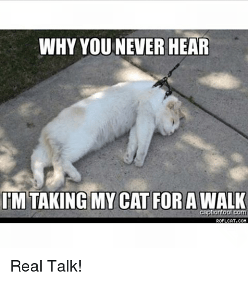 Memes, 🤖, and Coi: WHY YOU NEVER HEAR  IM TAKING MY CAT FOR AWALK  Capbontool Com  ROFLCAT.COI Real Talk!