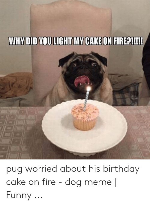Fine Whydid You Light My Cake On Firep Pug Worried About His Birthday Funny Birthday Cards Online Bapapcheapnameinfo