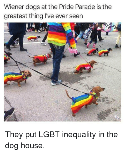 Dogs, Lgbt, and Memes: Wiener dogs at the Pride Parade is the  greatest thing I've ever seen They put LGBT inequality in the dog house.