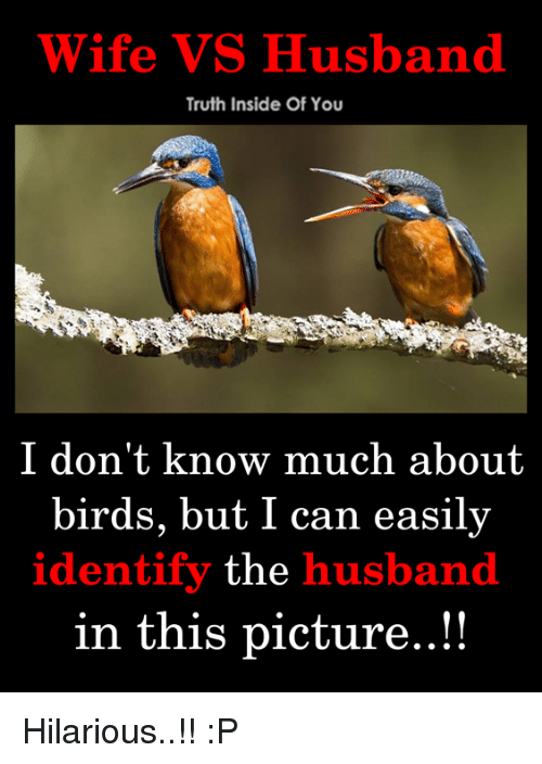 Memes, Birds, and Husband: Wife VS Husband  Truth Inside Of You  I don't know much about  birds, but I can easily  identify the husband  in this picture..!! Hilarious..!! :P