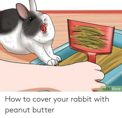 Wiki How How to Cover Your Rabbit With Peanut Butter | How