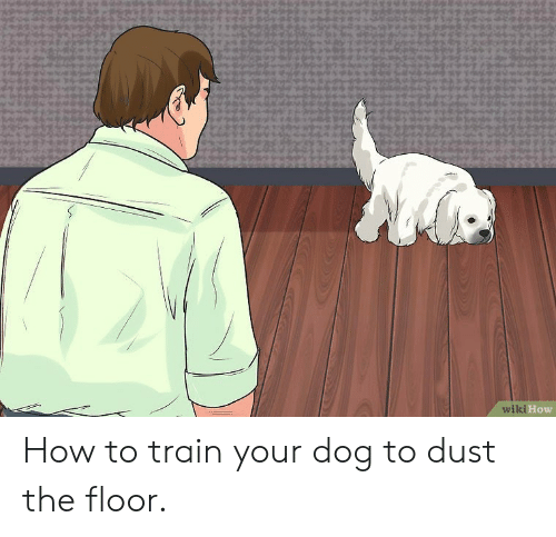 Wiki How How To Train Your Dog To Dust The Floor How To