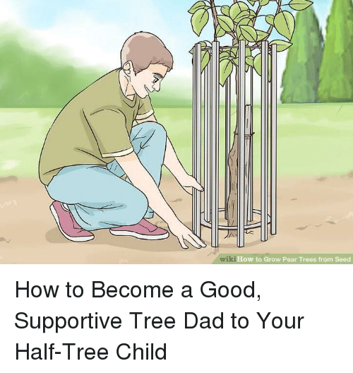 Wiki How To Grow Pear Trees From Seed Dad Meme On Me