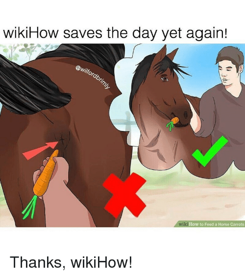 Wikihow Saves The Day Yet Again Wiki How To Feed A Horse