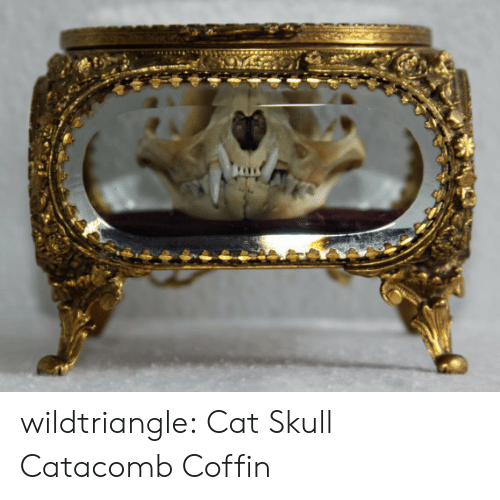 Tumblr, Blog, and Http: wildtriangle: Cat Skull Catacomb Coffin