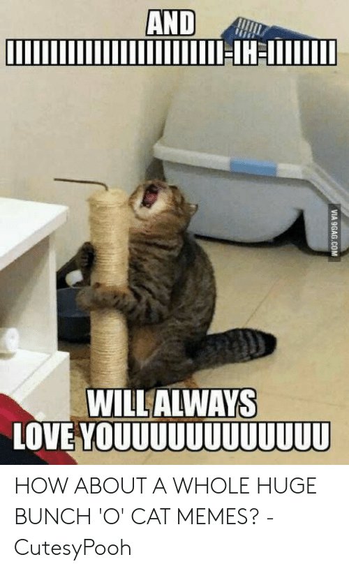 Love, Memes, and How: WILL ALWAYS  LOVE YOUUUUUUUUUUUU HOW ABOUT A WHOLE HUGE BUNCH 'O' CAT MEMES? - CutesyPooh