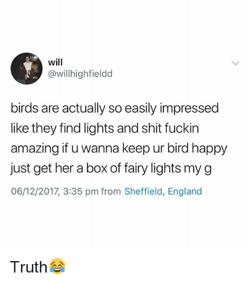 England, Shit, and Birds: will  @willhighfieldd  birds are actually so easily impressed  like they find lights and shit fuckin  amazing if u wanna keep ur bird happy  just get her a box of fairy lights my g  06/12/2017, 3:35 pm from Sheffield, England Truth😂