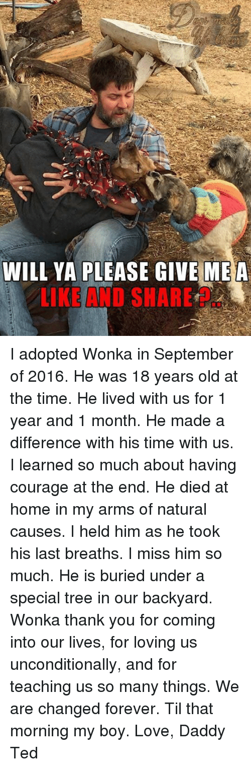 Love, Memes, and Ted: WILL YA PLEASE GIVE MEA  LIKE AND SHARE I adopted Wonka in September of 2016. He was 18 years old at the time. He lived with us for 1 year and 1 month. He made a difference with his time with us. I learned so much about having courage at the end. He died at home in my arms of natural causes. I held him as he took his last breaths. I miss him so much. He is buried under a special tree in our backyard. Wonka thank you for coming into our lives, for loving us unconditionally, and for teaching us so many things. We are changed forever. Til that morning my boy. Love, Daddy Ted