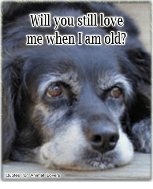 Will You Still Love Me When I Am Old Quotes For Animal Lovers