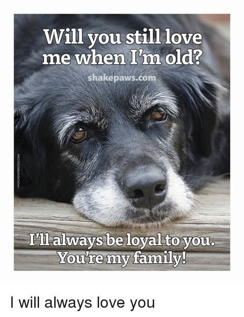 Will You Still Love Me When Im Old Shake Pawscom Ill Always Be