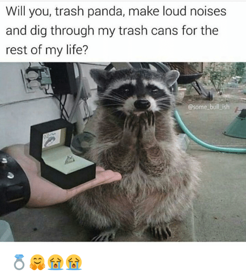 will you trash panda make loud noises and dig through 6697971 will you trash panda make loud noises and dig through my trash,Meme Trash