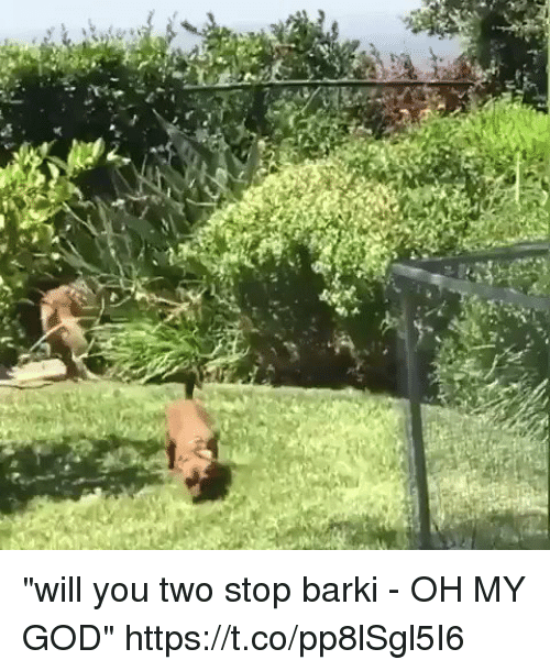 "God, Oh My God, and Girl Memes: ""will you two stop barki - OH MY GOD"" https://t.co/pp8lSgl5I6"