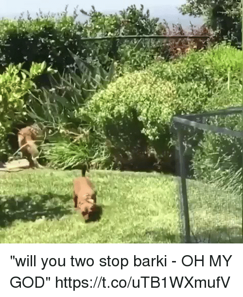 "God, Oh My God, and Girl Memes: ""will you two stop barki - OH MY GOD"" https://t.co/uTB1WXmufV"