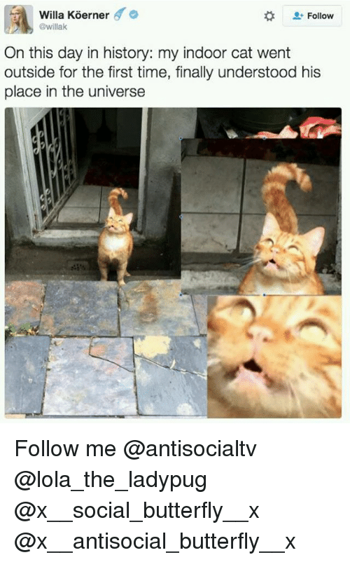 Memes, Butterfly, and History: Willa Koerner '  @willak  Follow  On this day in history: my indoor cat went  outside for the first time, finally understood his  place in the universe Follow me @antisocialtv @lola_the_ladypug @x__social_butterfly__x @x__antisocial_butterfly__x