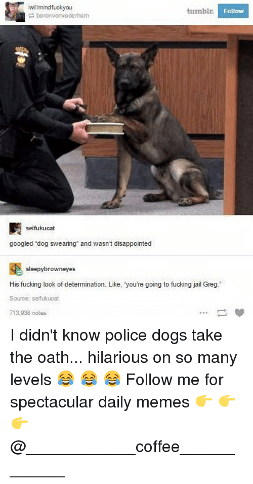 Disappointed, Dogs, and Fucking: willmindfuckyou  tumblr  Follow  baronvonvaderham  seifukucat  googled dog swearing and wasn't disappointed  sleepybrowneyes  His fucking look of detemination. Like, you're going to fucking jail Greg.  Source: seifukucat  713,938 notes I didn't know police dogs take the oath... hilarious on so many levels 😂 😂 😂 Follow me for spectacular daily memes 👉 👉 👉 @____________coffee____________