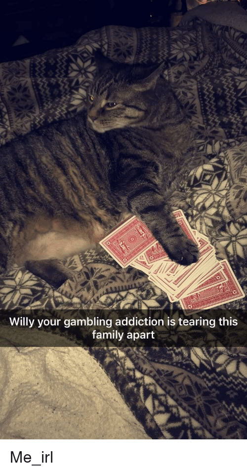 meme squirrel gambling addiction