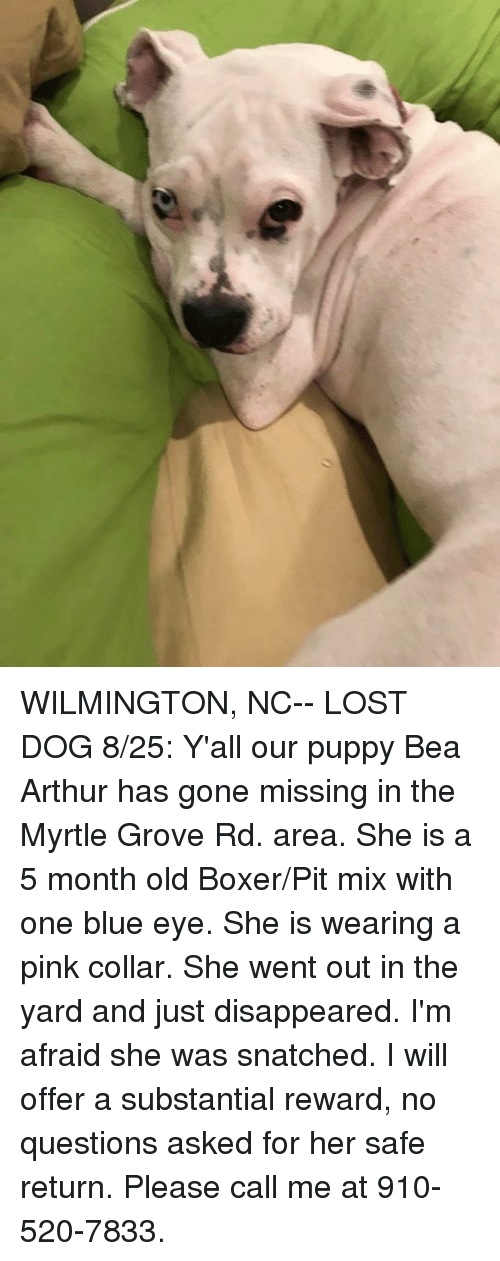 Wilmington Nc Lost Dog 825 Yall Our Puppy Bea Arthur Has Gone