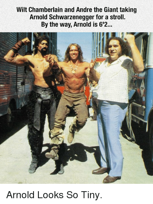 André the Giant, Arnold Schwarzenegger, and Giant: Wilt Chamberlain and Andre the Giant taking  Arnold Schwarzenegger for a stroll.  By the way, Arnold is 6'2... <p>Arnold Looks So Tiny.</p>