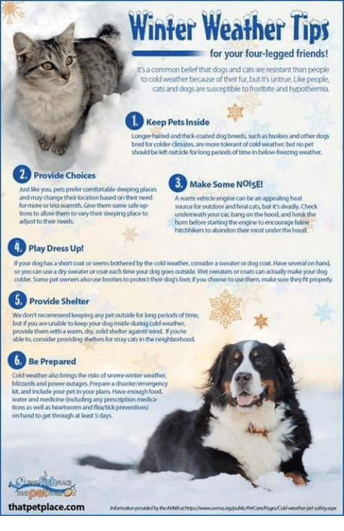eab9431d75d Cats, Comfortable, and Dogs: Winter Weather Tips for your four-legged  friends