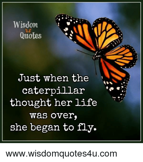 Wisdom Quotes Just When The Caterpillar Thought Her Life Was Over
