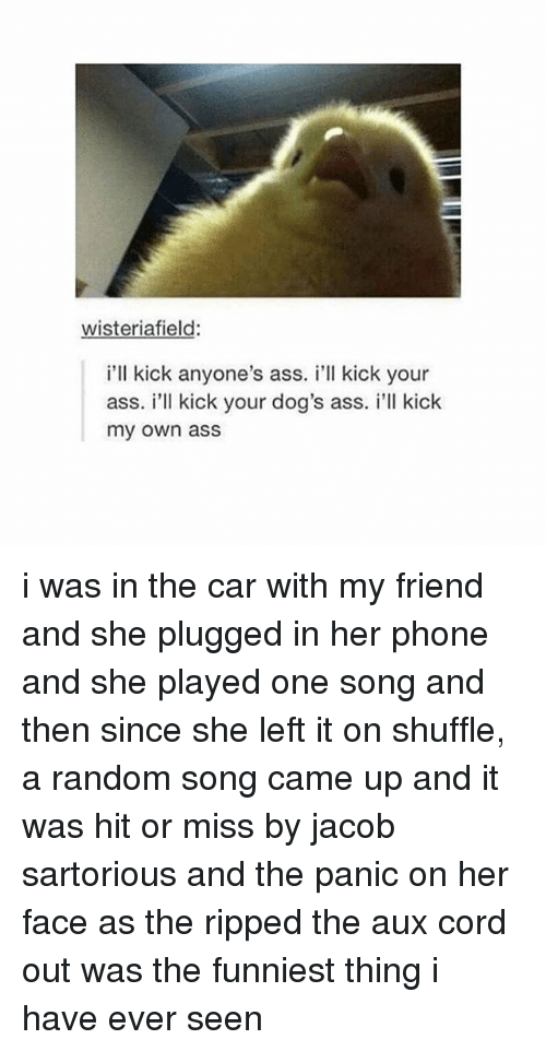 Ass, Dogs, and Phone: wisteriafield:  i'll kick anyone's ass. i'll kick your  ass. i'll kick your dog's ass. i'll kick  my own ass i was in the car with my friend and she plugged in her phone and she played one song and then since she left it on shuffle, a random song came up and it was hit or miss by jacob sartorious and the panic on her face as the ripped the aux cord out was the funniest thing i have ever seen