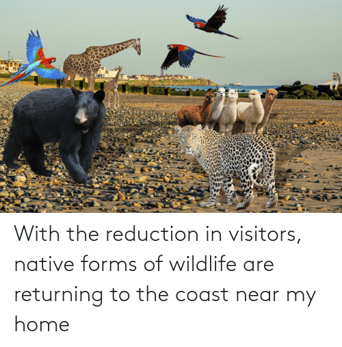 Home, Reduction, and Visitors: With the reduction in visitors, native forms of wildlife are returning to the coast near my home