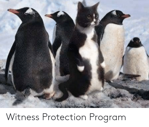 Witness, Program, and Witness Protection: Witness Protection Program