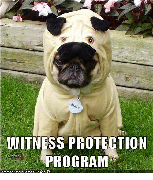 Memes, Programming, and 🤖: WITNESS PROTECTION  PROGRAM  ICANHASCHEEZEURGER, COM