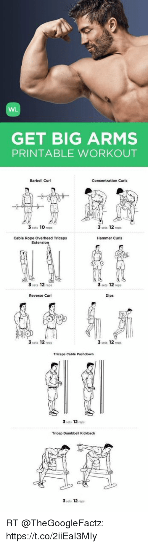photograph about Printable Arm Workouts named WL Attain Massive Hands PRINTABLE Exercise Barbell Curl Target