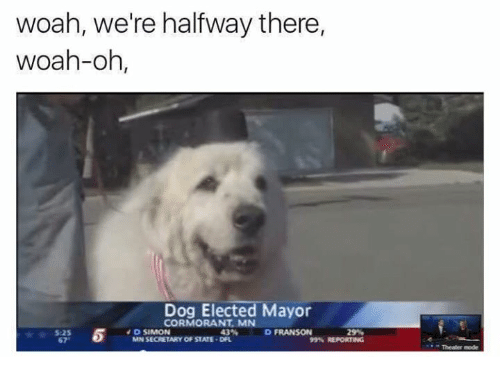 Dog Elected Mayor