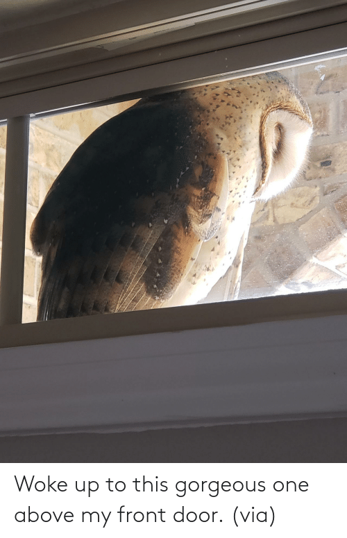 Target, Gorgeous, and Imgur: Woke up to this gorgeous one above my front door.(via)