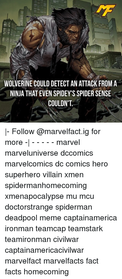 Facts, Meme, and Memes: WOLVERINE COULD DETECT AN ATTACK FROMA  NINJA THAT EVEN SPIDEY'S SPIDER SENSE  COULDN'T |- Follow @marvelfact.ig for more -| - - - - - marvel marveluniverse dccomics marvelcomics dc comics hero superhero villain xmen spidermanhomecoming xmenapocalypse mu mcu doctorstrange spiderman deadpool meme captainamerica ironman teamcap teamstark teamironman civilwar captainamericacivilwar marvelfact marvelfacts fact facts homecoming