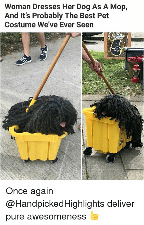 Memes, Best, and Dresses: Woman Dresses Her Dog As A Mop,  And It's Probably The Best Pet  Costume We've Ever Seen Once again @HandpickedHighlights deliver pure awesomeness 👍