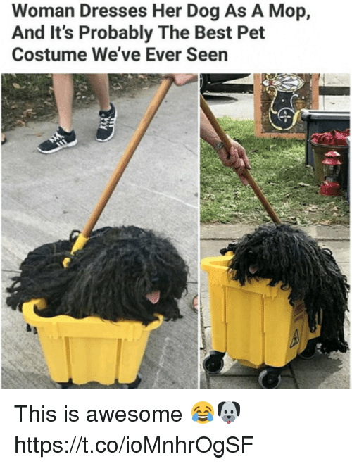 Memes, Best, and Dresses: Woman Dresses Her Dog As A Mop,  And It's Probably The Best Pet  Costume We've Ever Seen This is awesome 😂🐶 https://t.co/ioMnhrOgSF
