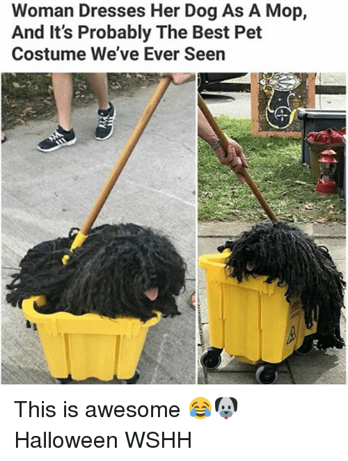 Halloween, Memes, and Wshh: Woman Dresses Her Dog As A Mop,  And It's Probably The Best Pet  Costume We've Ever Seen This is awesome 😂🐶 Halloween WSHH