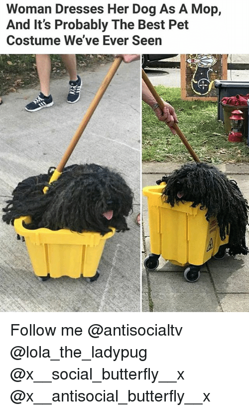 Memes, Best, and Butterfly: Woman Dresses Her Dog As A Mop,  And It's Probably The Best Pet  Costume We've Ever Seen Follow me @antisocialtv @lola_the_ladypug @x__social_butterfly__x @x__antisocial_butterfly__x