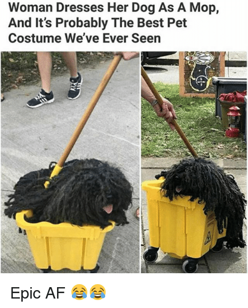 Af, Memes, and Best: Woman Dresses Her Dog As A Mop,  And It's Probably The Best Pet  Costume We've Ever Seen Epic AF 😂😂