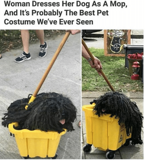 Dank, Best, and Dresses: Woman Dresses Her Dog As A Mop,  And It's Probably The Best Pet  Costume We've Ever Seen